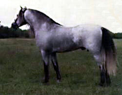 Bristol Bright Blue shown standing in-hand near-side profile from just behind center