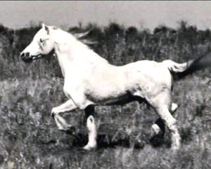 Clan Glomadh trotting in pasture shown full profile from near-side