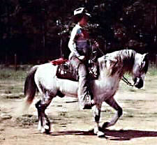 GlanNant Tango ridden Western shown from his off-side full profile