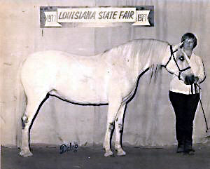 Lithgow Wishnik shown in-hand at Louisiana State Fair 1977 (full off-side profile)